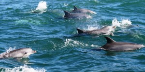 Aug 2014 Hog Bay Dolphin Watch