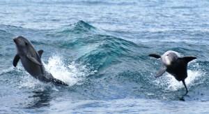 Oct 2014 VH Dolphin Watch